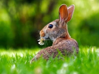 Rabbit with flower in grass