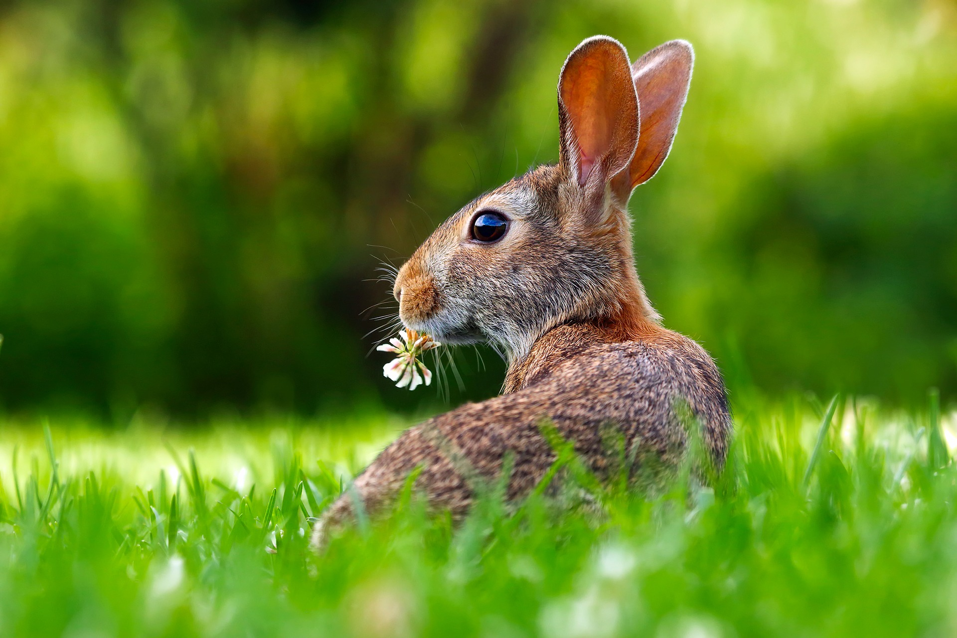 Rabbit with flower in grass
