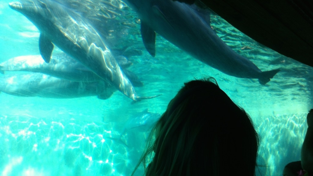 Girl looking up at aquarium with dolphins