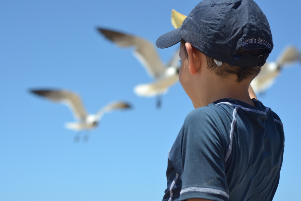 boy with seagulls