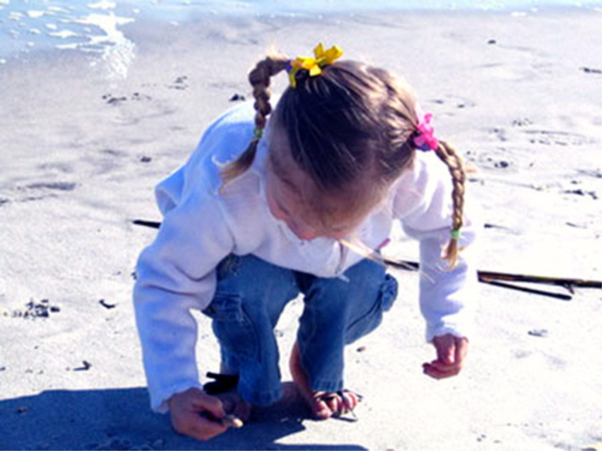 Little girl discovering shells on beach