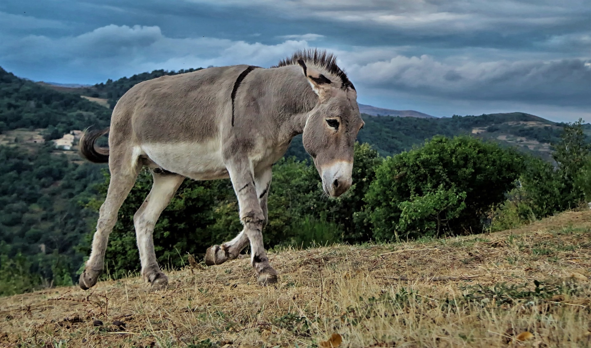 donkey on hillside