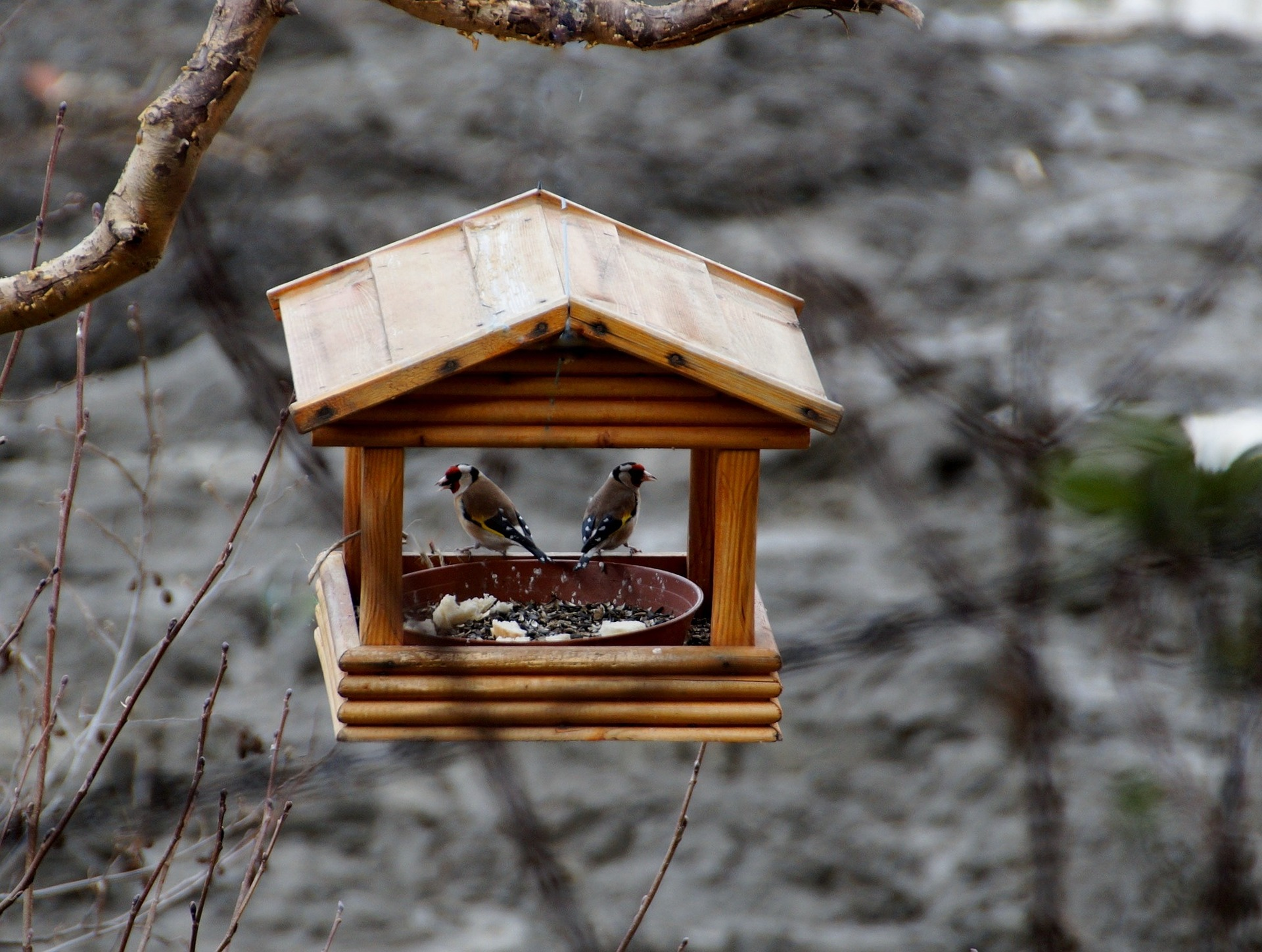 birds in feeder