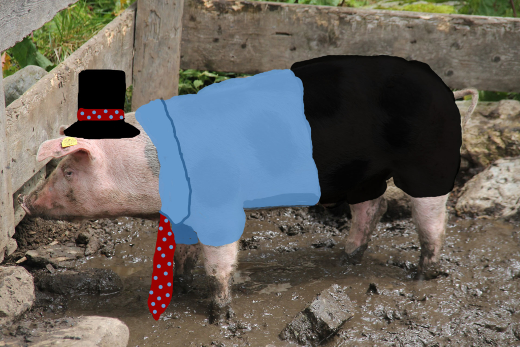 A dressed up pig is still a pig