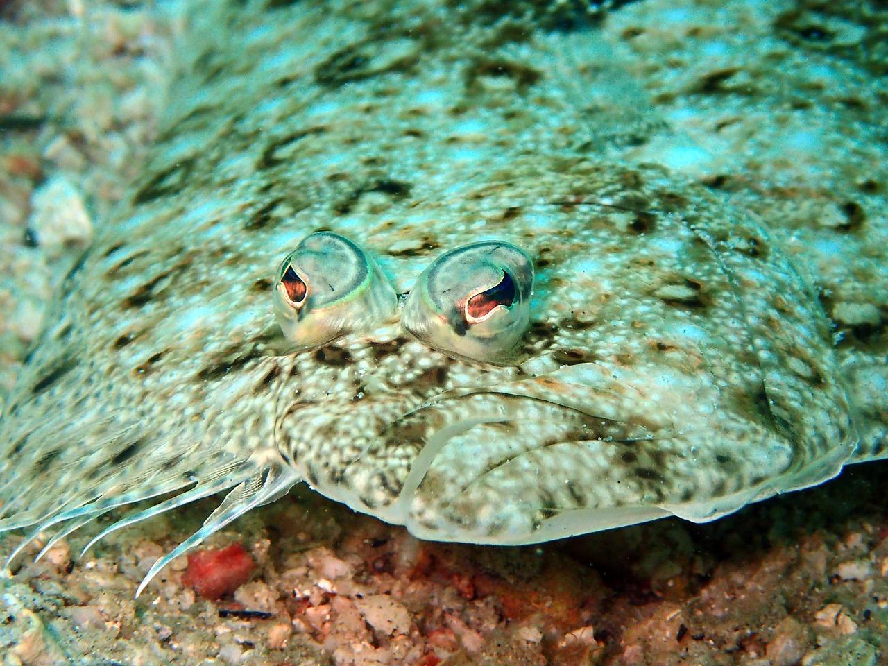 Fantastic Fish - sole on sea floor