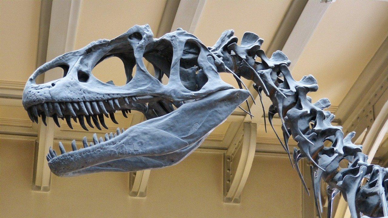 Dino-mite Quiz by Katrina Cassel, dinosaur skeleton in museum,