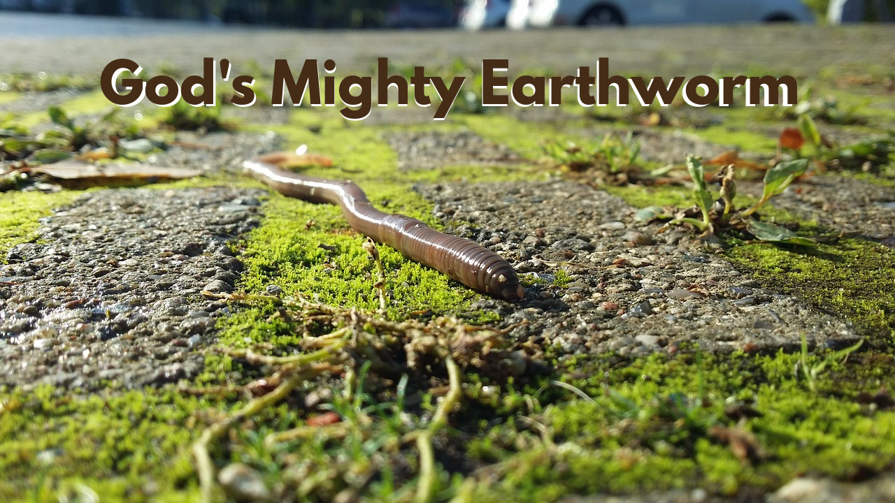 God's Mighty Earthworms