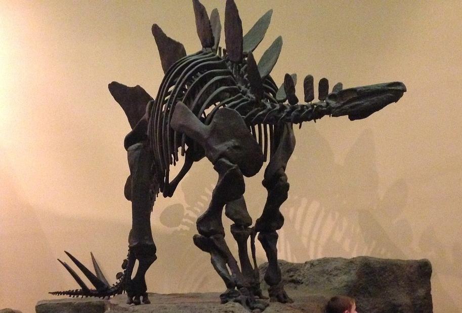 Dino-mite Quiz, Stegosaurus